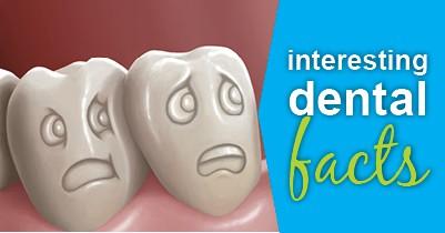 interesting dental facts